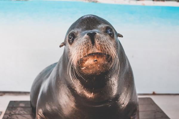 Marine human-wildlife conflict